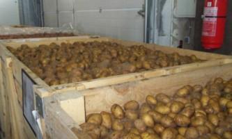 Як зберігати картоплю?