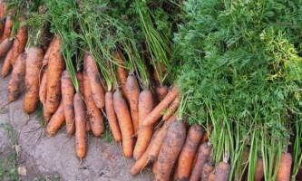 Як зберігати моркву взимку?