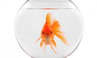 Вибираємо золоту рибку: кілька рекомендацій