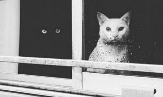 Як інь і ян: чорні і білі котики