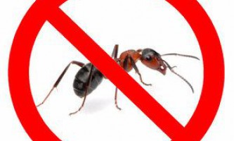Як позбавиться від мурашок на ділянці