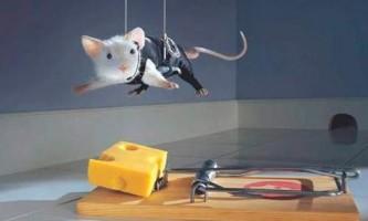 Як позбавиться від мишей, народними методами