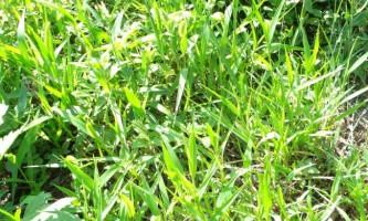 Як позбавиться від трави?