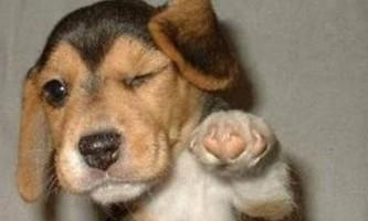 Як уникнути агресії собаки у ветеринарній клініці?