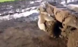 Як коала за квадроциклом ганявся