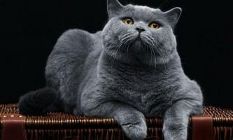 Як годувати кішку сухим кормом правильно: інструкція для власників