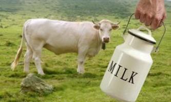 Як купити «правильну» корову