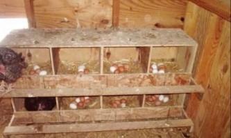 Як легко зробити гнізда для курей несучок