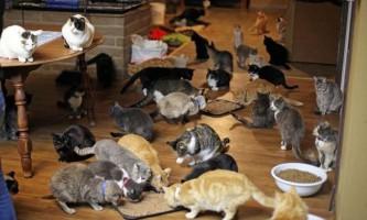 Як меблі впливає на поведінку кішок