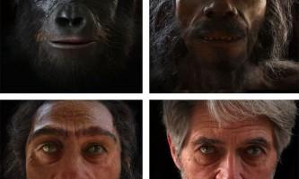 Як змінювалося обличчя людини в процесі еволюції