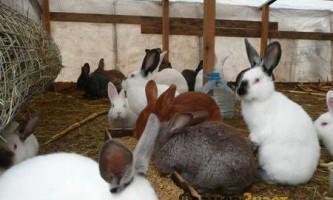 Як правильно утримувати кроликів