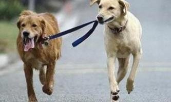 """Як навчити собаку команді """"поруч""""?"""