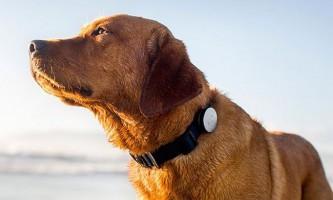 Як носяться електронні технології змінюють життя собак