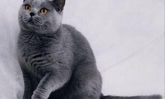 Як спілкуватися з глухою кішкою