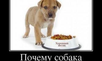 Як відучити щеняти або собаку підбирати їжу на вулиці?