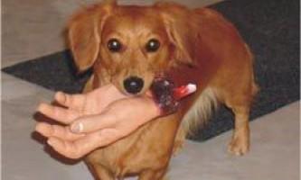 Як відучити собаку кусатися за руки господарів?
