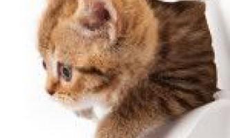 Як відучити вашу кішку дерти шпалери - поради і методи