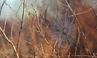 Як павуки створюють павутину?
