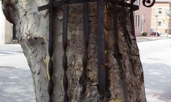 Як перевозять столітні дерева
