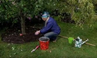 Як підготувати свій сад до зимових холодів