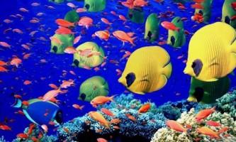 Як підводні мешканці знаходять їжу
