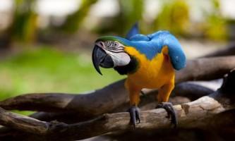 Як з`явилися птахи?