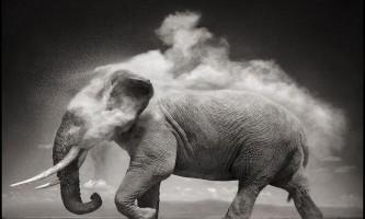 Знавіснілий слон вибіг на вулиці індійського міста