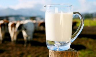 Як підвищити удій молока