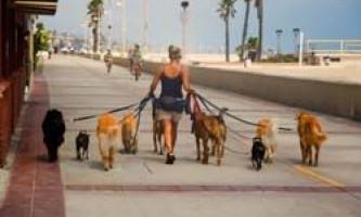 Як правильно, часто і скільки разів потрібно вигулювати собаку?