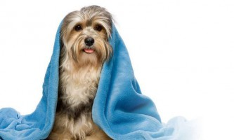Як правильно чистити собаку?
