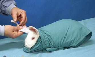 Як правильно робити щеплення кроликам