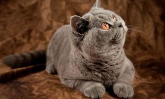 Як правильно глистогінних кішок і кошенят