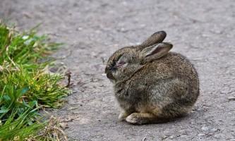 Як правильно годувати кроликів?