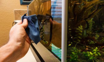 Як правильно помити акваріум з рибками