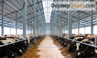 Як правильно побудувати корівник на 200 корів прив`язного утримання