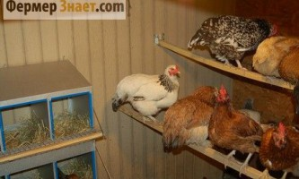 Як правильно продезінфікувати курник