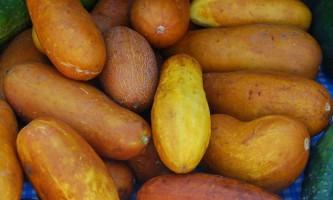 Як правильно зібрати насіння огірків?