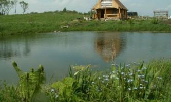 Як правильно удобрювати рибоводний ставок