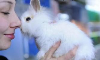 Як правильно доглядати за домашніми кроликами