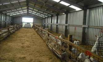 Як правильно доглядати за козами