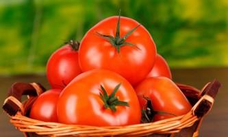 Як правильно виростити томати