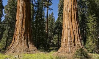 Як передбачити висоту дерева