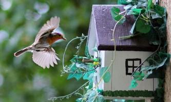 Як залучити в сад птахів?