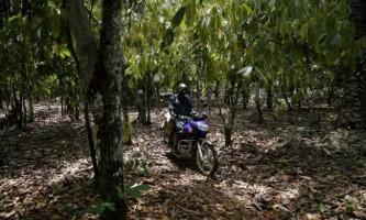 Як виробляють какао в нігерії