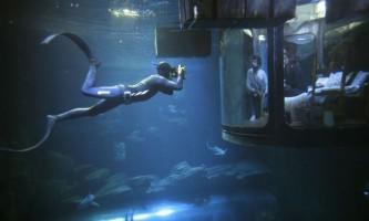 Як провести ніч в оточенні акул