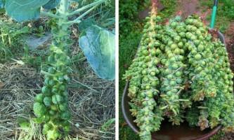 Як ростуть всім знайомі фрукти і овочі