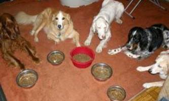 Як розвинути витримку у собаки перед годуванням?