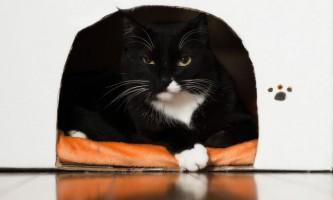 Як зробити будиночок для кішки з коробки?
