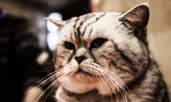 Як зробити клізму коту в домашніх умовах?