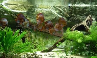 Як зробити кристально чисту воду в акваріумі?